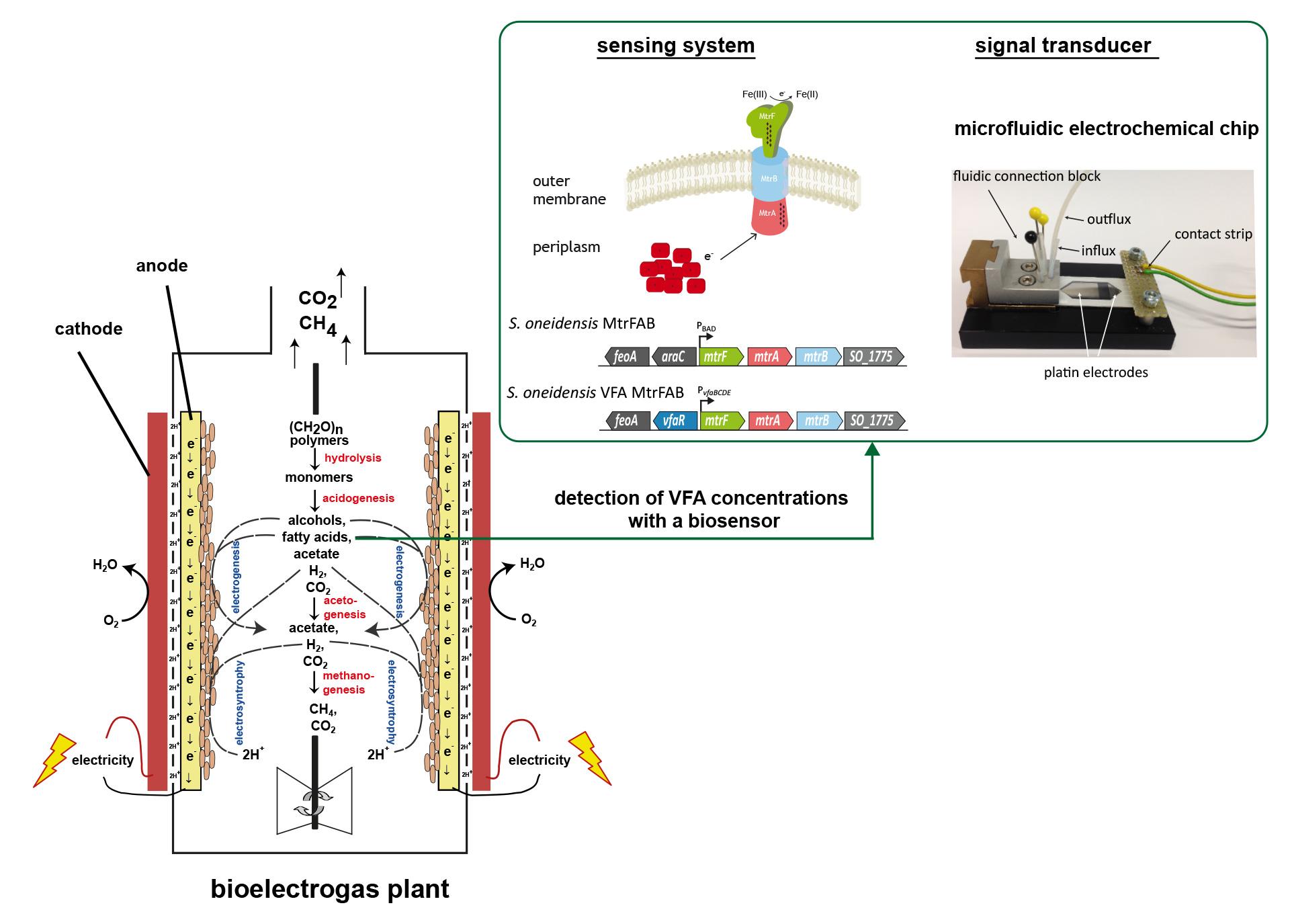 Biogas – neue Entdeckungen